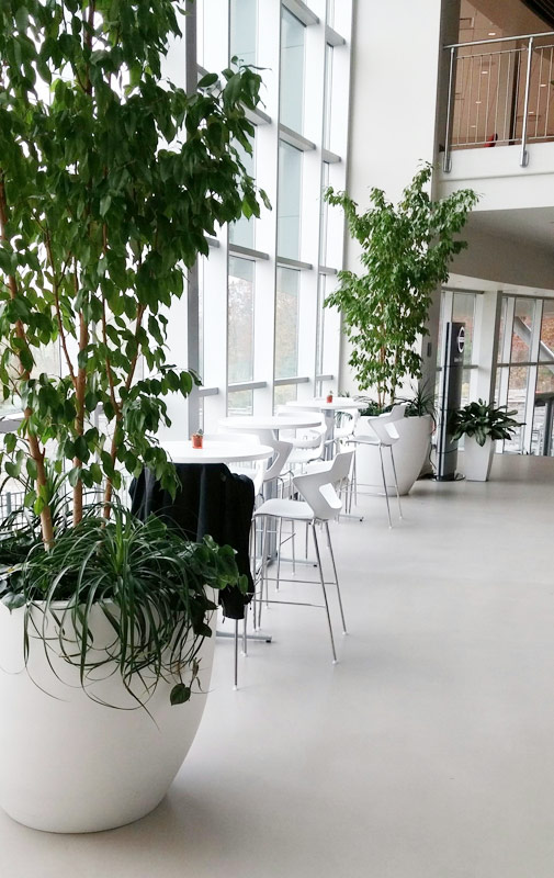 indoor plants for busineses in Roanoke and surrounding areas