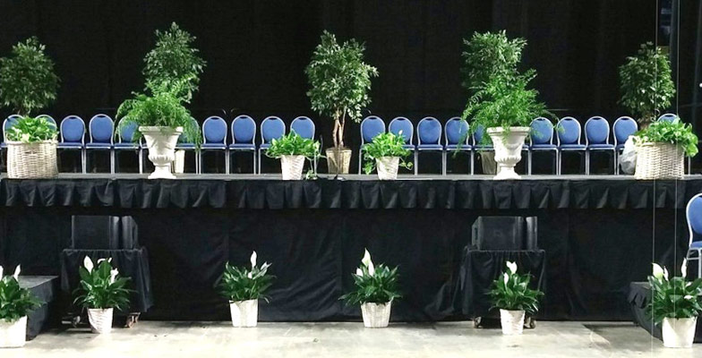 Plant rentals for events in Roanoke